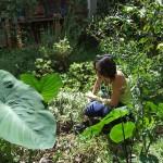 Quintal Agroecológico