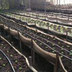 Horticultura suspensa